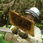Beekeeper Jim Hayward